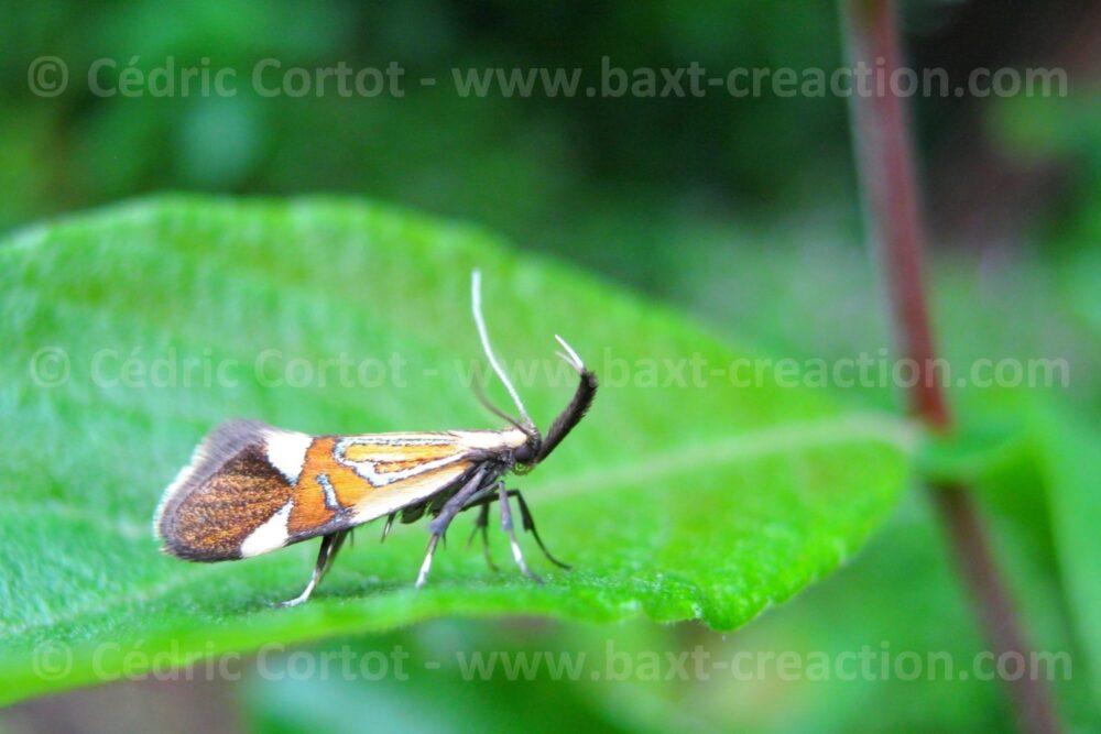Photographie Nature - Le petit monde du Vivant - Cédric Cortot - BaXT créAction
