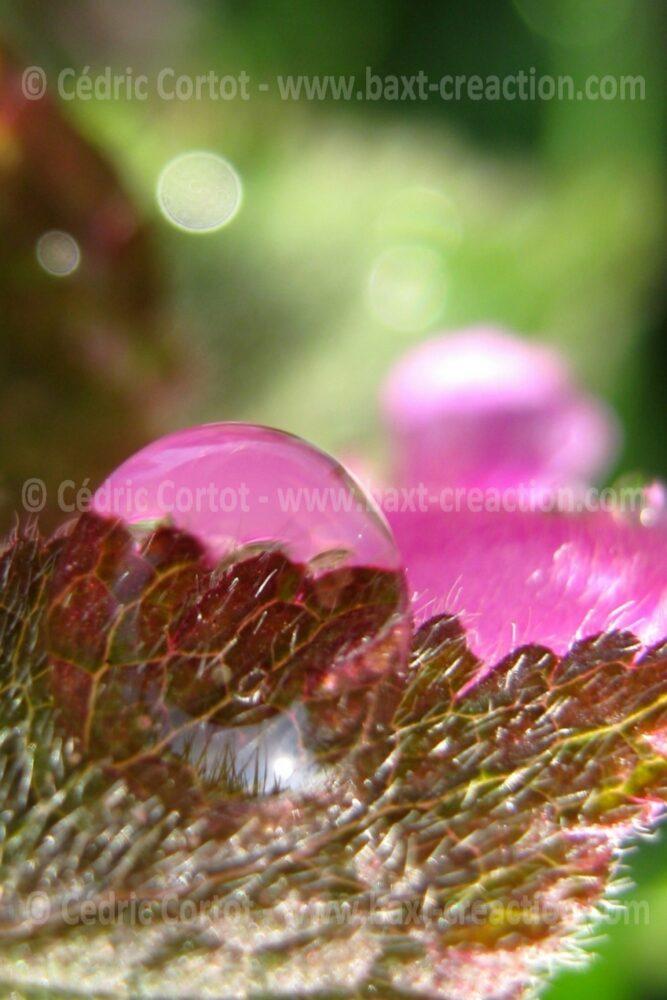Photographie Nature - Rosée et goutte de pluie - Cédric Cortot - BaXT créAction